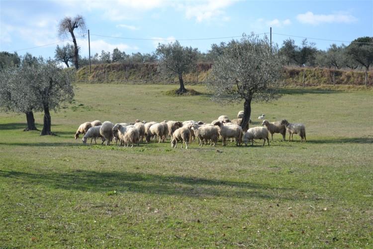 Agriturismo_Andalù (26)