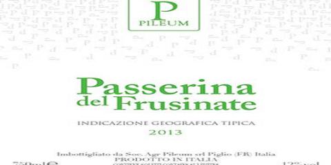 Pileum_Passerina